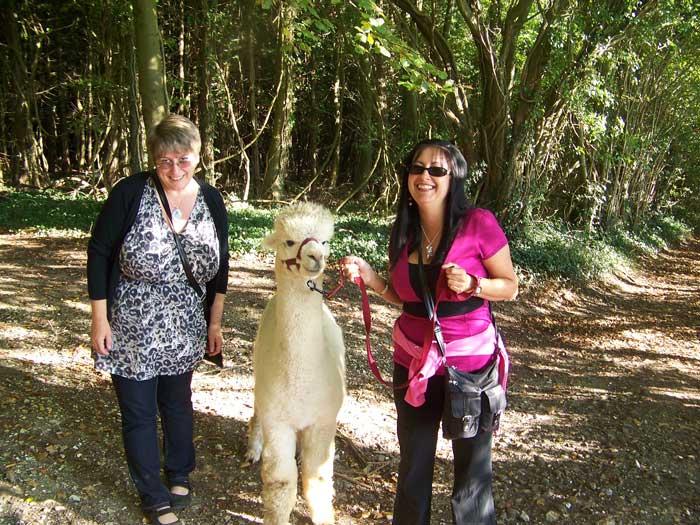 Dunreyth Alpacas-Walks